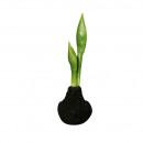Amaryllis à l'oignon, H30cm, paillettes noires